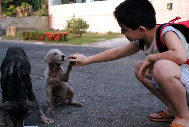 Pai descobriu o que filho fazia quando ele saía de casa: bondade!