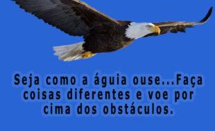 Seja como a águia