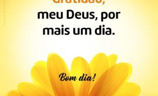 Gratidão meu Deus bom dia